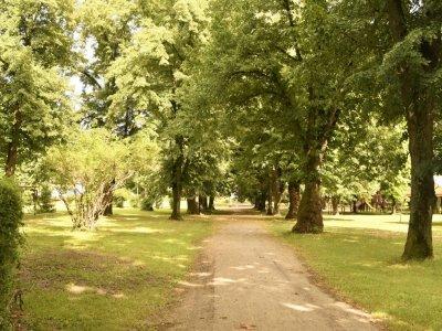 Szabadság park2